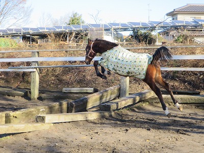 馬の自由な飛越