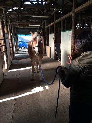 乗馬初心者コースで馬とのコミュニケーション方法レッスン