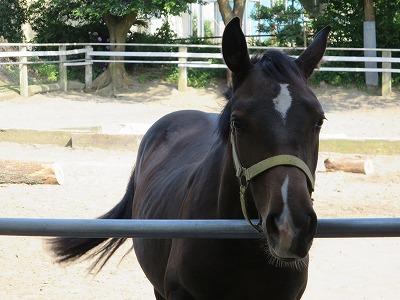 ナチュラルホースマンシップで馬とアイコンタクト