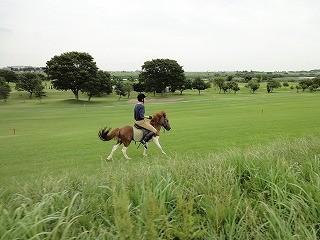 これも乗馬の楽しみ方
