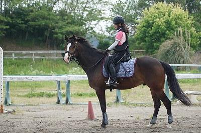 馬を賢く育てる
