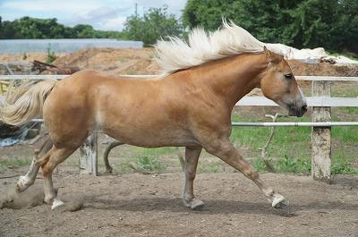 馬はなぜ走るのか