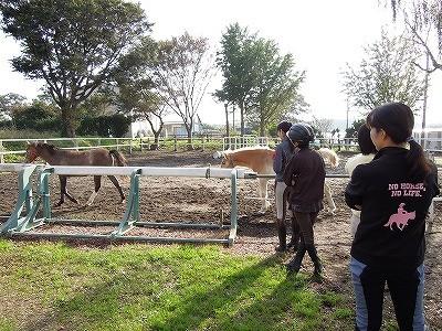 素晴らしい馬で素敵な体験乗馬を