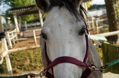 馬が見ている世界