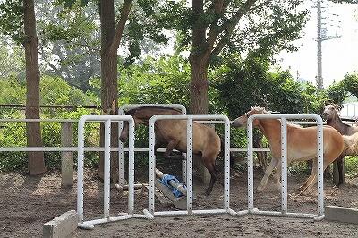 放牧中に自分で障害を飛んで遊ぶ馬アル