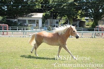 馬の幸せを願う乗馬