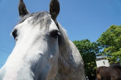 馬とはこういうもの