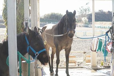 馬の気持ち良い顔と見守る愛