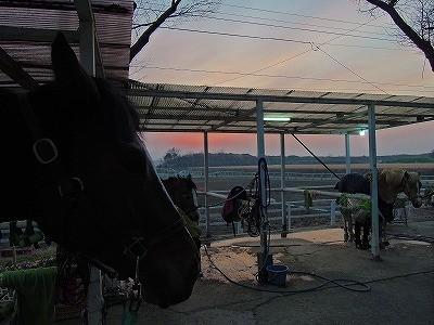夕焼けの乗馬クラブ