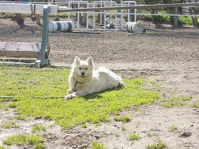 乗馬クラブのマスコット犬ナナちゃんです