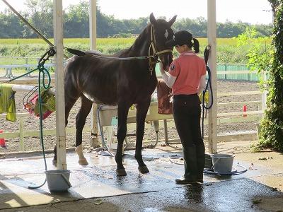素敵な人と素敵な馬