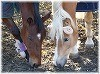 うまからひつじへバトンタッチ!ひつじのコスプレをした馬の写真