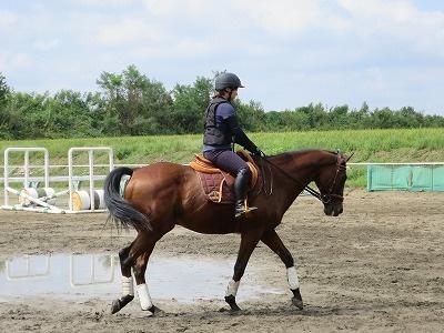 馬を観察する