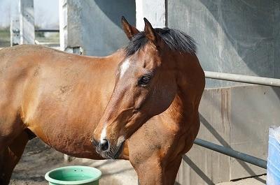 馬のボディーランゲージ