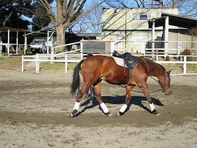 調馬索で馬とダンス