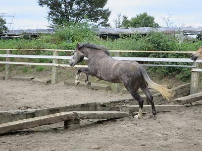 馬の自由飛越