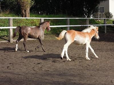 乗馬クラブの放牧風景