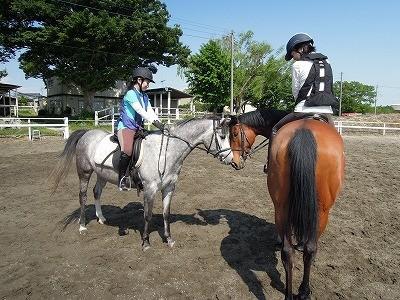 馬に好かれるには
