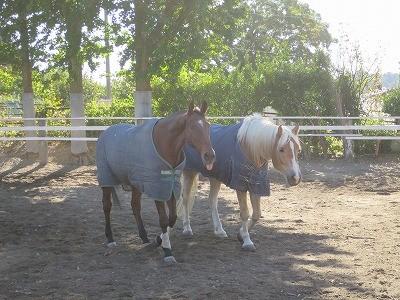仲良しの馬