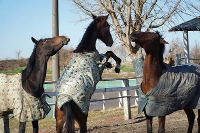 元気に遊ぶ馬