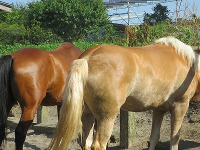 馬の体調管理