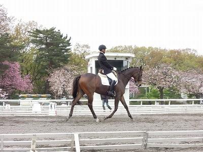 上手な馬の乗り方とカメラの撮り方