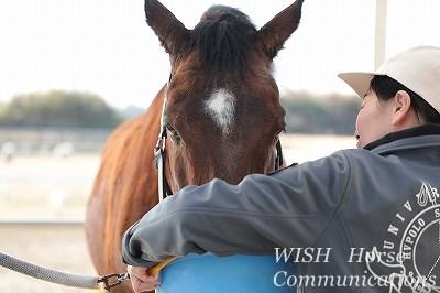 人と馬のハッピーコミュニケーション