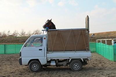 馬運車でぶい~ん