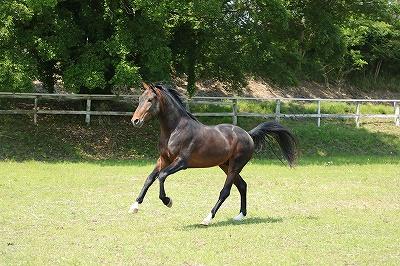 馬の幸せと馬術上達の両立を目指す