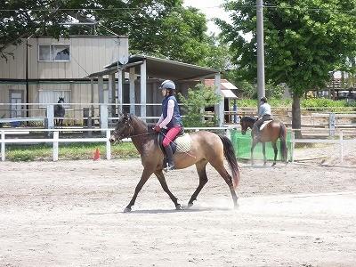 爽やかな五月の乗馬クラブ