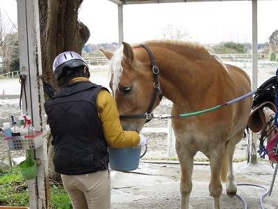 馬と話ができますように