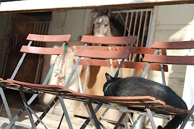 厩舎と猫はよく合うね