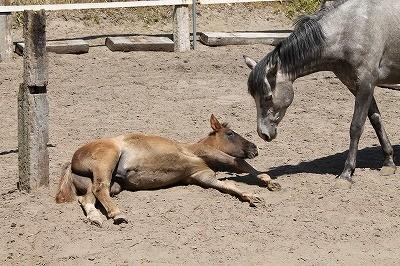 馬との接し方