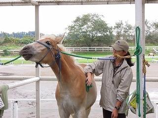 馬の気持ちいいの表情