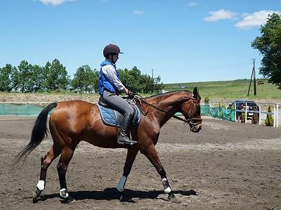 馬と人みんなが幸せになれるように