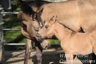人間は自分のことは自分で何とかできるが馬の人生は人間に左右される