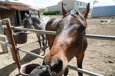 愛情が馬を育てる