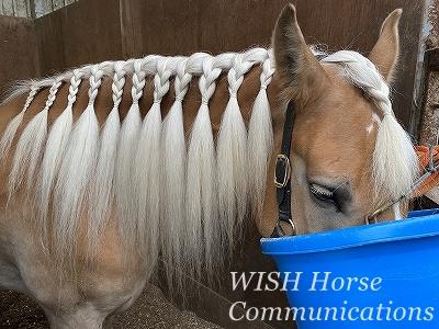 動物の行動心理学に基づいた乗馬