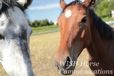馬と一緒になる乗馬