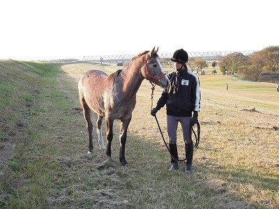 馬の気持ちを理解したい
