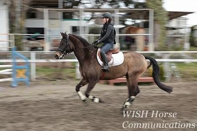 乗馬で馬とひとつになって駈ける