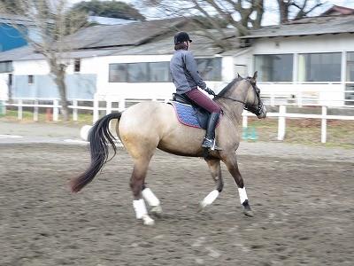 調馬索での馬とコミュニケーションを騎乗に役立てる