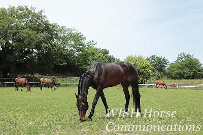 馬の気持ちをつかむ乗馬