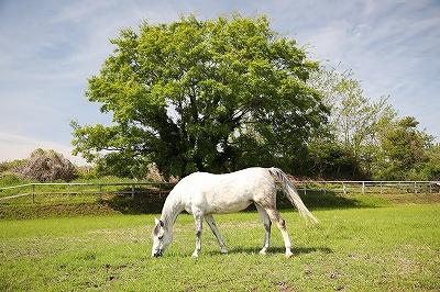 馬と素晴らしい風景