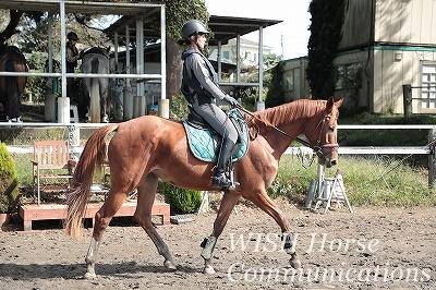優しい馬と乗馬