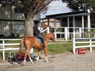 秋の乗馬クラブで体験乗馬