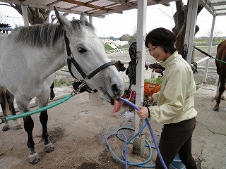馬はホースからも水を飲むんだよ