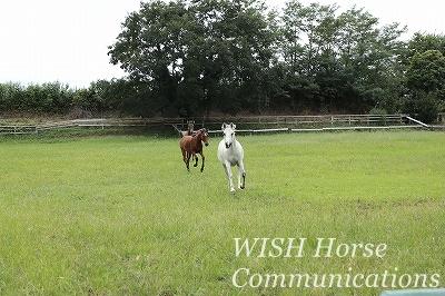 乗馬の見方