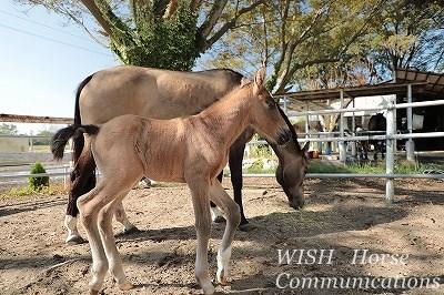 秋生まれの仔馬