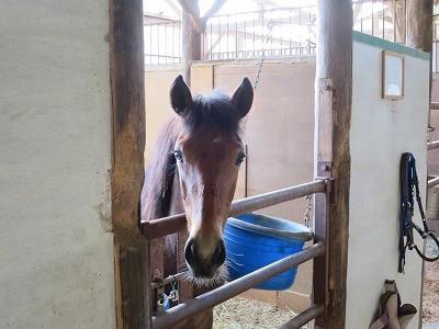 新馬調教 馬と会話する!